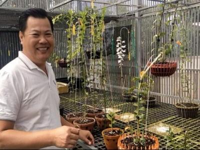 Bộ sưu tập lan đột biến trị giá hàng tỉ đồng của vườn lan Thiện Orchid.