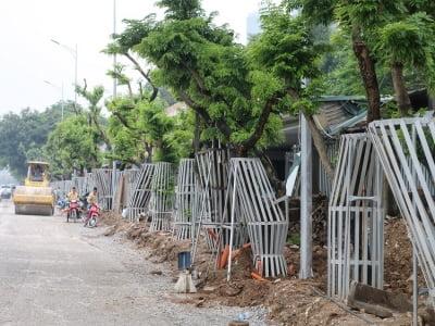Truyền dịch cứu hàng sưa đỏ tiền tỷ ở Hà Nội